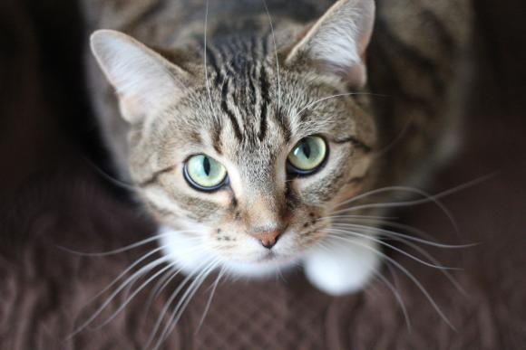 La muerte de nuestro perro o gato puede resultar muy dolorosa. / Pexels