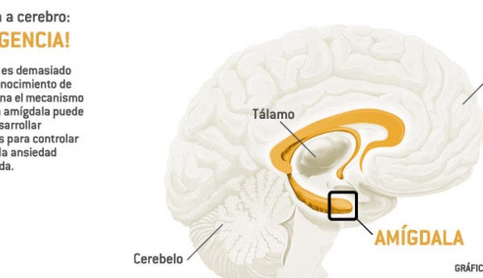 Así funciona el circuito del miedo en nuestro cerebro - Ciencia y ...