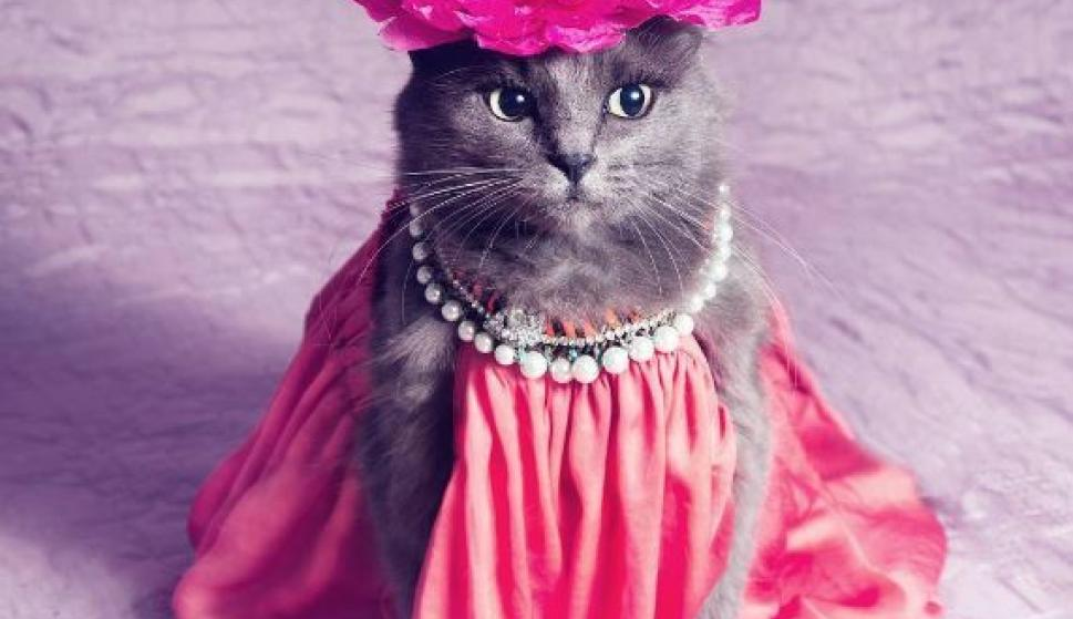 Un gato rumano haciendo de modelo de joyas se convierte en la ...
