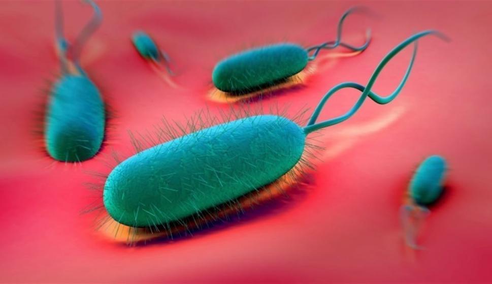 bacteria en la ulcera