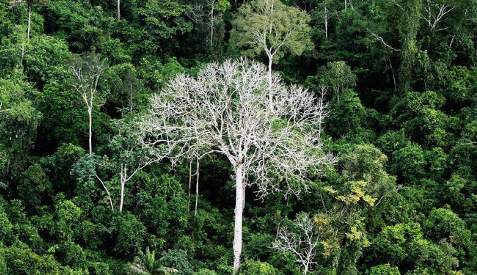 La amazonia pierde m s selva de lo reconocido por brasil espa a diario la informacion - Mas goy fornells de la selva ...