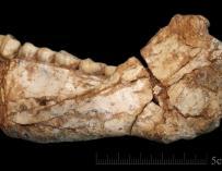 Fotografía facilitad por el Instituto Max Planck de Antropología Evolutiva de Leipzig (Alemania) hoy 7 de junio de 2017 que muestra una mandíbula de Homo Sapiens que ha sido hallada en la localidad de Yebel Irhoud  (EFE/Jean-Jacques Hublin)