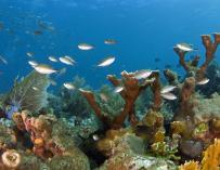 Banco de coral en Australia