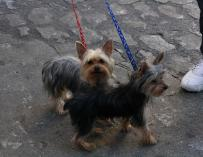 Liberbank ofrece un seguro de asistencia sanitaria para mascotas