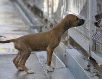 El Centro de Recogida de Animales de la DPH encuentra un nuevo hogar a 332 perros