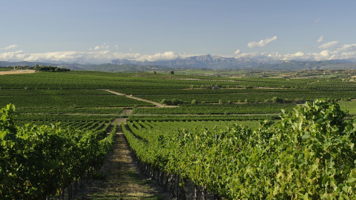 El vino, una excusa para descubrir los encantos de Somontano